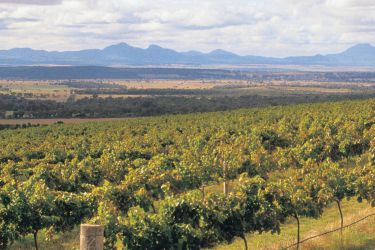 The Mountain Wine Trail